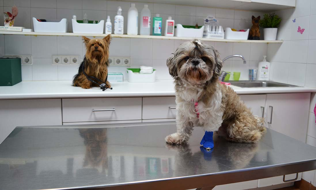 cirugias-veterinario-bilbao