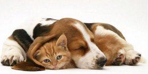 veterinario-perros-bilbao
